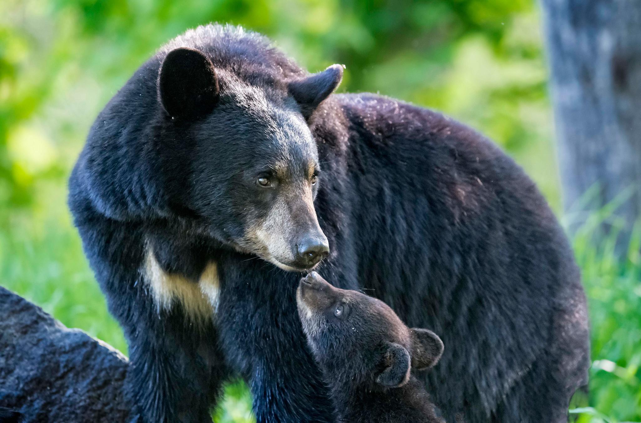 Мальчика в лесу спас медведь