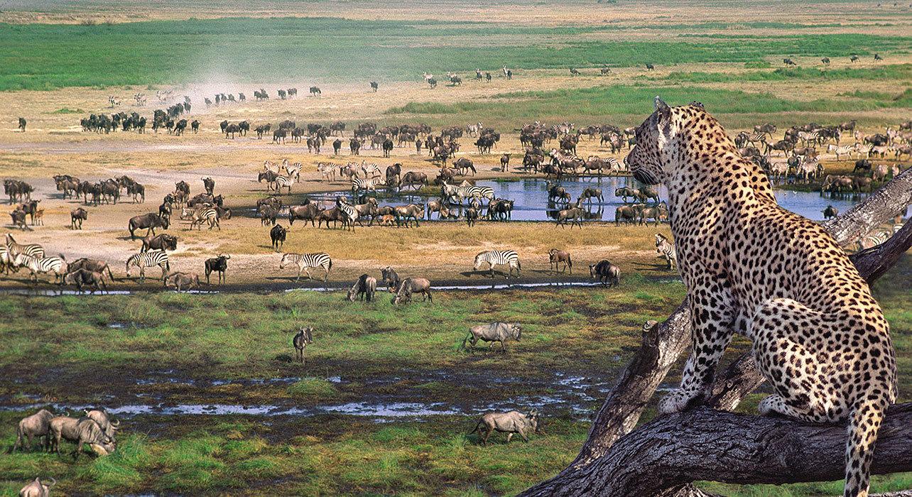 Топ-6 национальных парков в Танзании