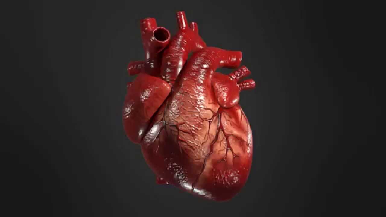 Главный риск смерти для нашего сердца