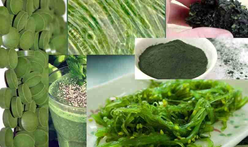 Спирулина - водоросль красоты