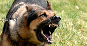 Как вести себя в экстремальных ситуациях?. Злая собака. Как себя вести?
