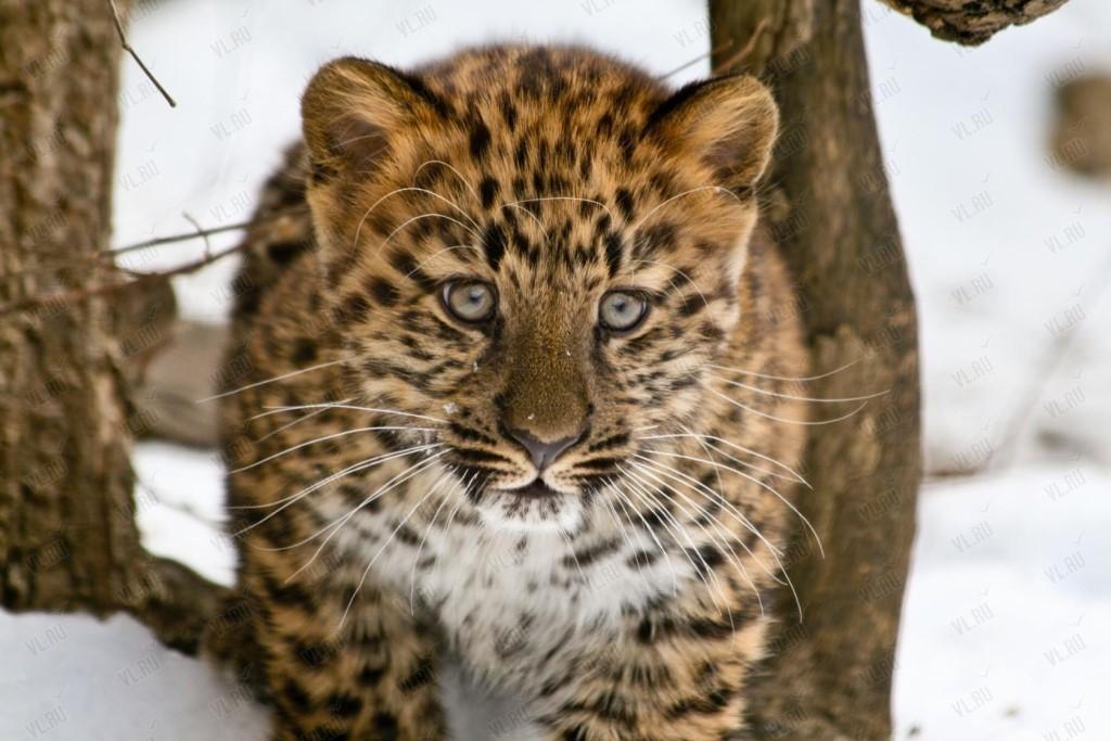 Катя Андреев возмущена убийством леопарда в Абхазии