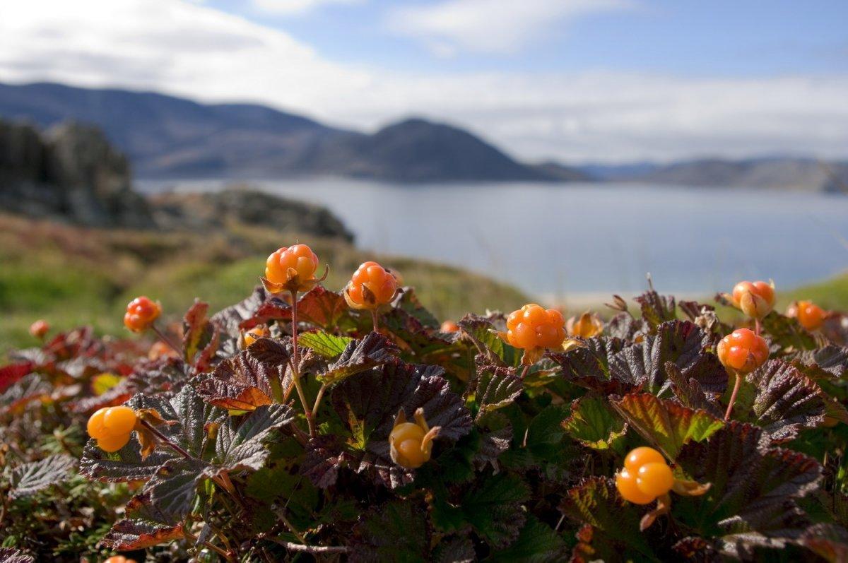 Natura Siberica выдумывает растения для своей продукции
