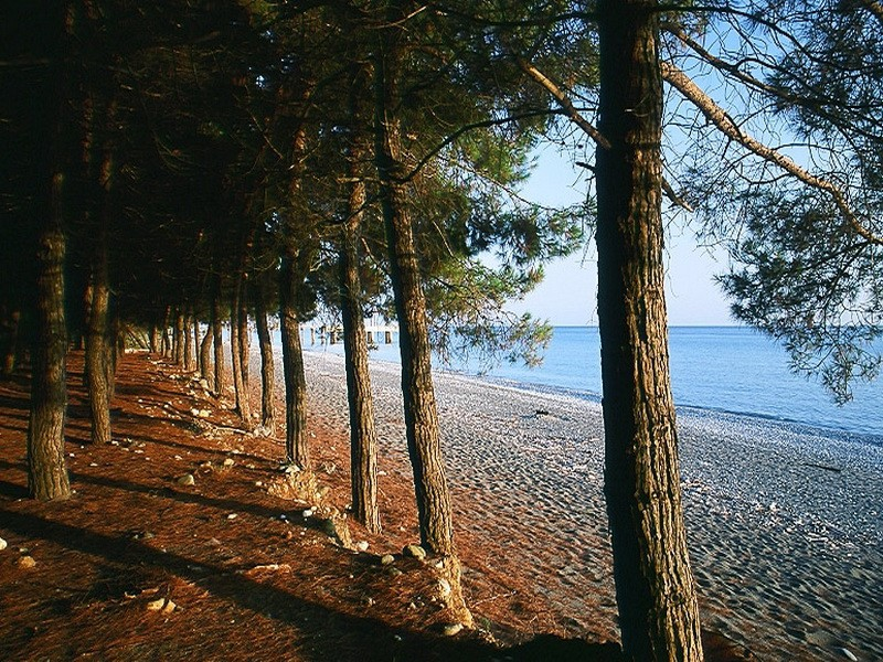 Отдыхаем летом. Пицунда – целебный воздух реликтовых рощ и чистое море
