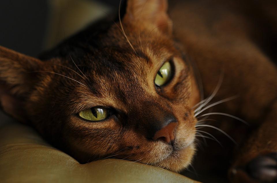 Приметы: почему нельзя будить кота