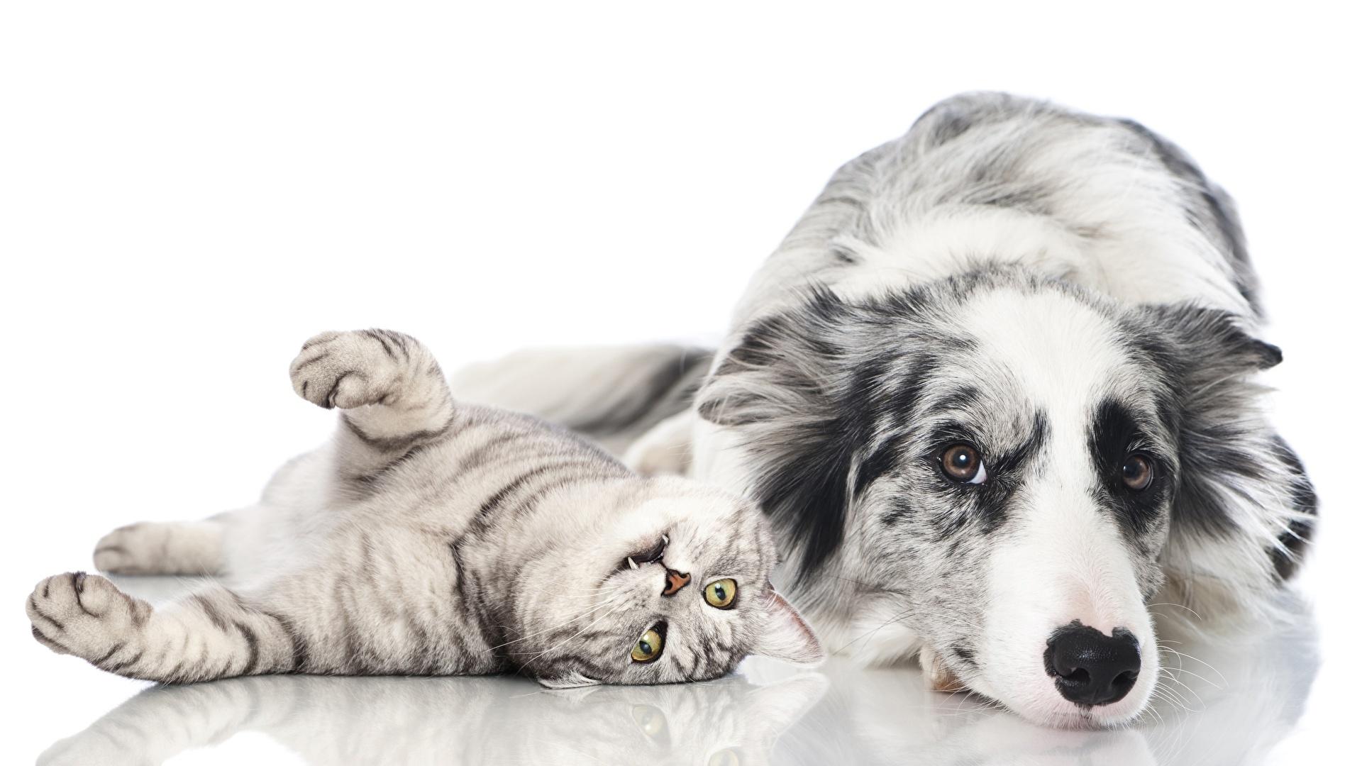 Диана Анкудинова решает, кто лучше: кошки или собаки