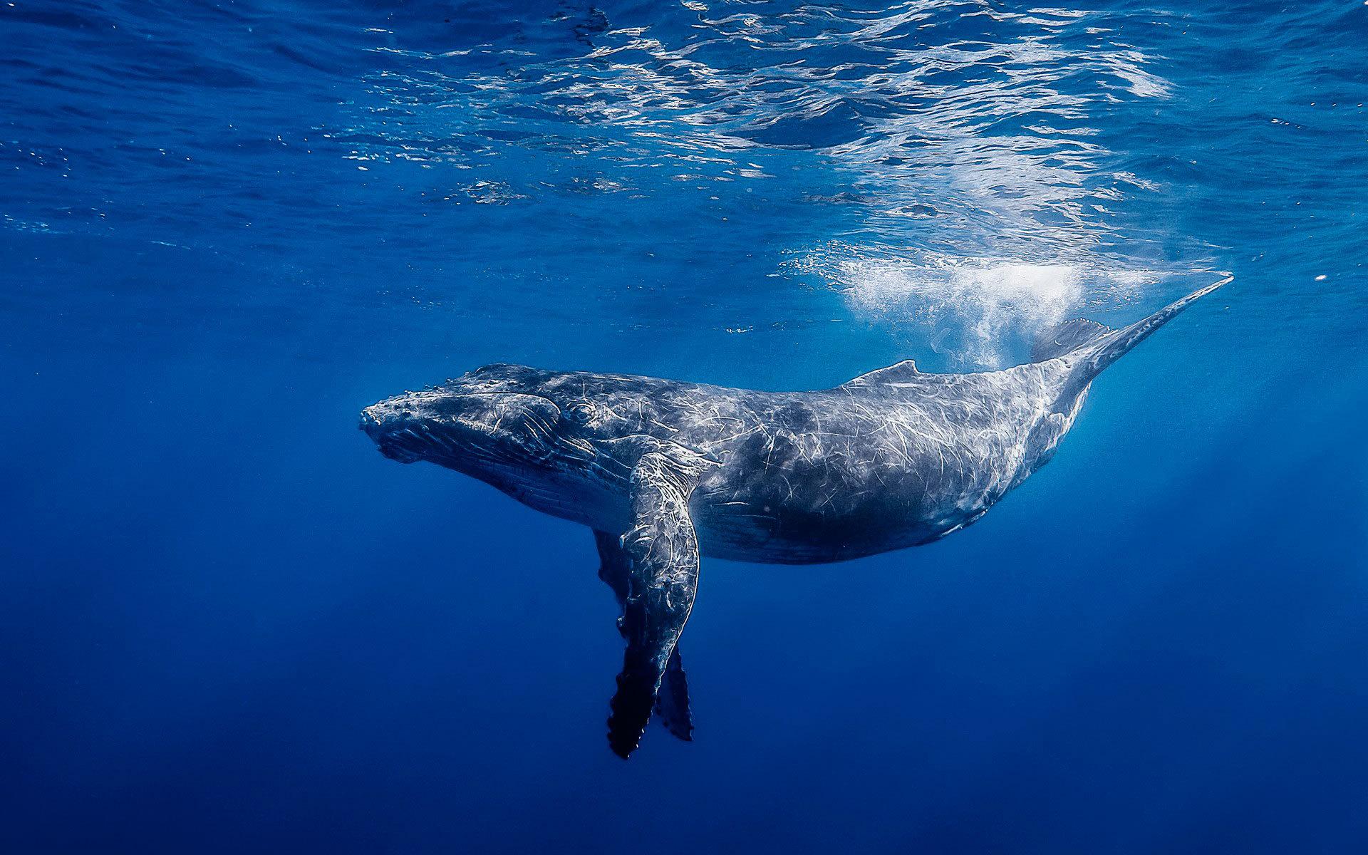 Helmut Lang создали совместный проект с Parley for the Oceans