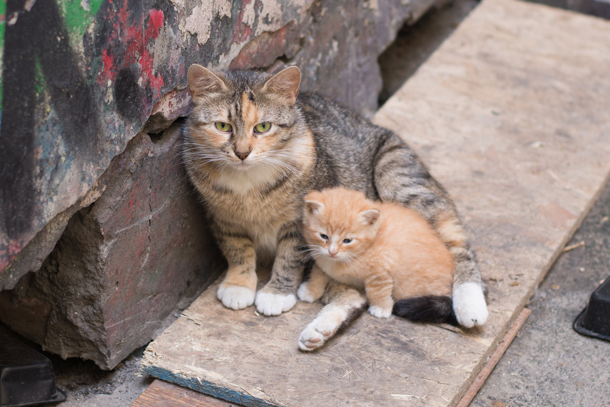 Закон, который спасет кошек