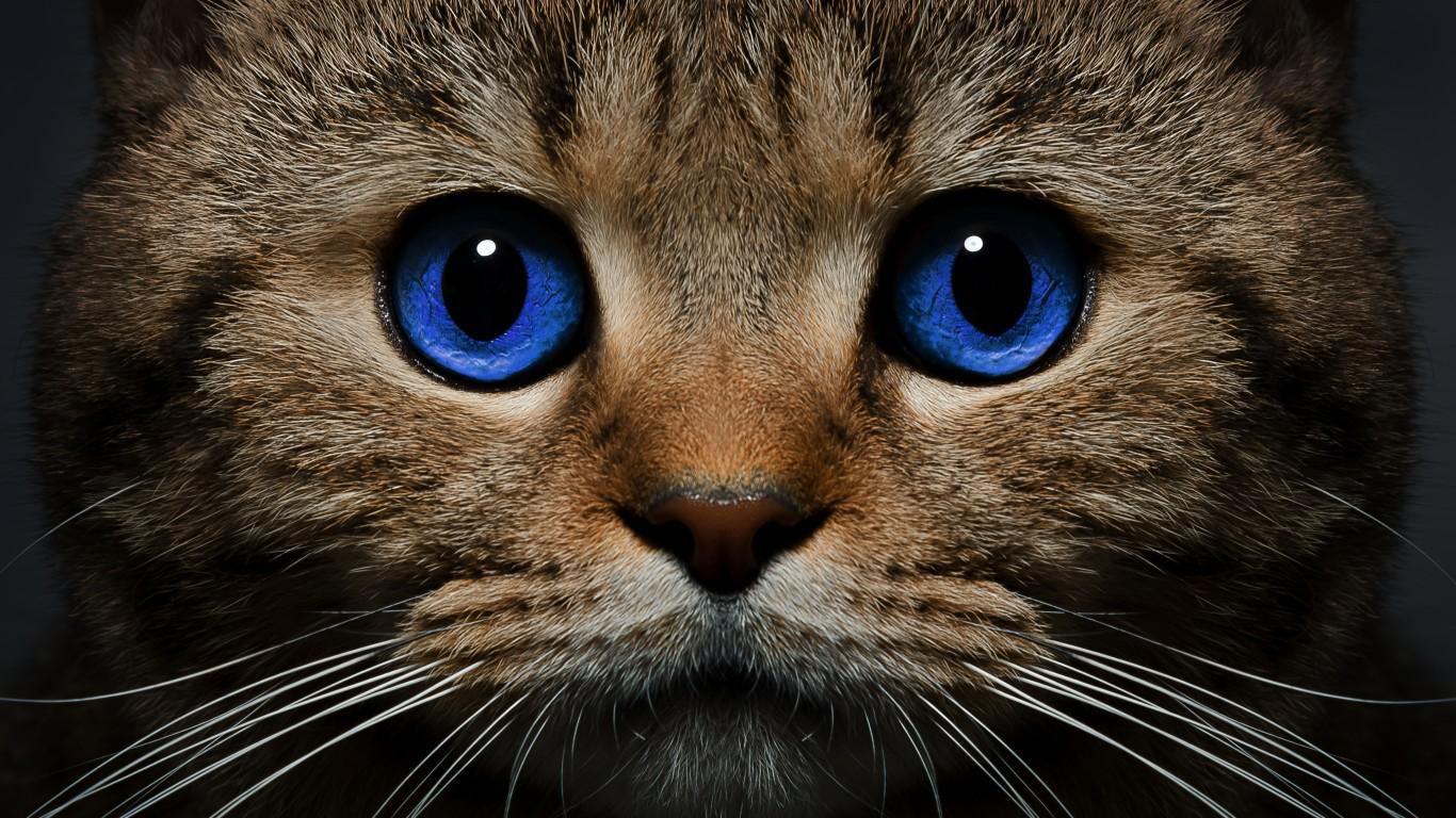 Россия и Австрия совместно создают вакцину от аллергии на кошек