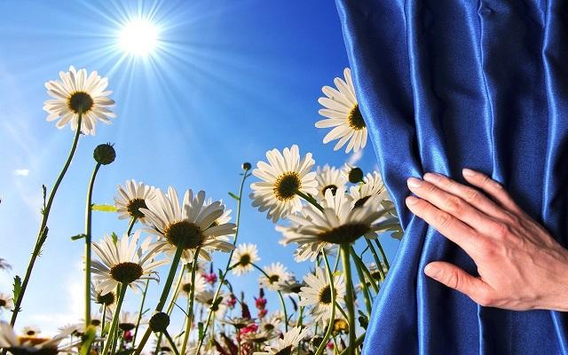 Один цветок может изменить мир. 14893.jpeg