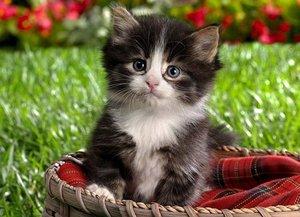Помощь животным: Шесть способов сделать мир лучше. животные