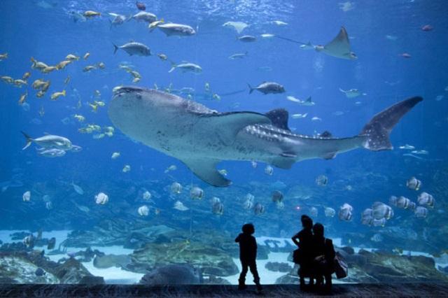 Самые грандиозные океанариумы в мире