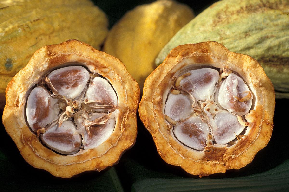 Как потребляли какао 3900 лет назад