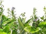 Какие травы помогают похудеть?