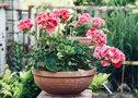 Комнатные растения, которые должны быть в каждом доме