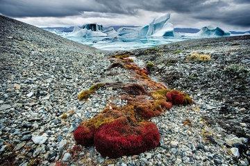 Арктика останется без рыбы