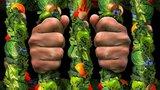 Орторексия - болезнь поклонниц здоровой пищи