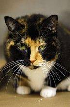 Кошка по кличке Виллоу потерялась 5 лет назад, когда ее хозяева делали ремонт в своем доме в Брумфилде, штат Колорадо. Она пошла погулять и не вернулась. Хозяева давно уже считали питомицу погибшей...