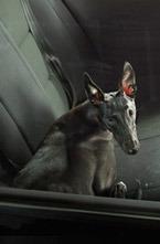 В Лондоне завершилась выставка «Молчание собак в машинах» фотографа Мартина Осборна.