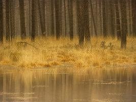 Страна лесов